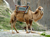 No, we didn't ride on camel