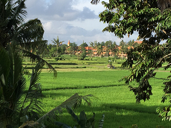 Ubud, Bali: View from our villa @ Alam Jiwa